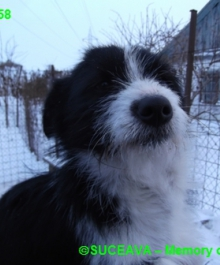hund-081-1958-7-01-2013-003