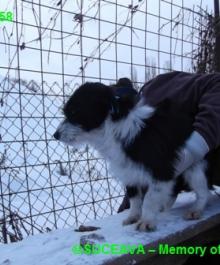 hund-081-1958-7-01-2013-004