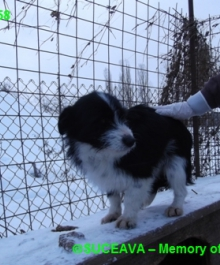 hund-081-1958-7-01-2013-005
