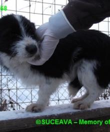 hund-081-1958-7-01-2013-007