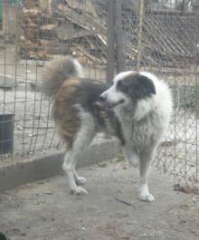 hund-6-3-h
